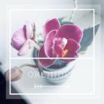 partecipazioni orchidee